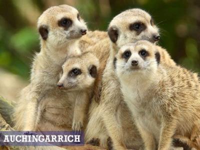Auchingarrich