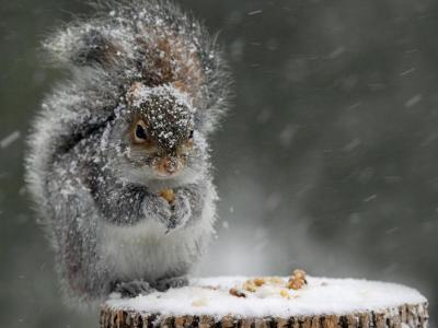 squirrel-in-winter