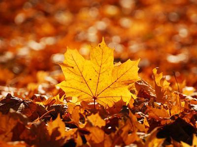 da-autumn-leaf