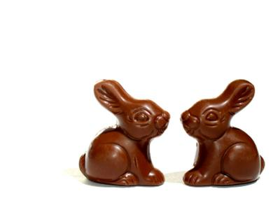 Chocolate Bunnys
