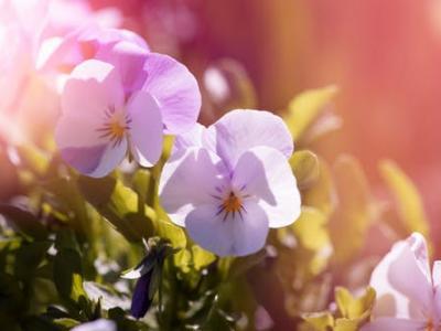 Spring spectacular offer
