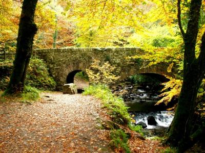 landscape---torc-bridge-in-autumnj-ogrady