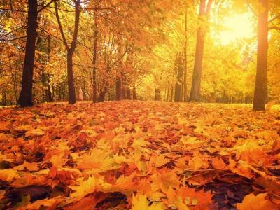 Autumn Breaks