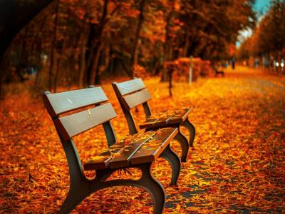 Autumn Benches and Leaves