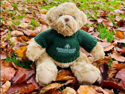 Teddy Bear Green Farnham Lawn