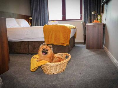 creggan-court-new-dog-friendly-room