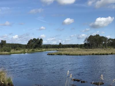Surrey Explorer - Pond