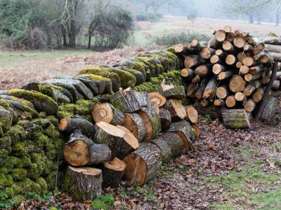 Gliffaes Logs