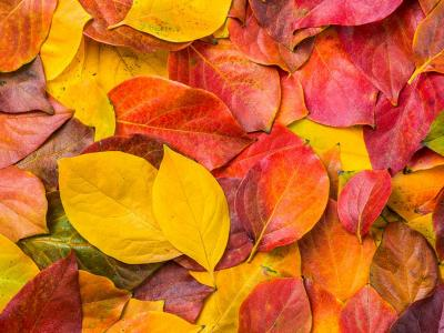 autumn, leaves