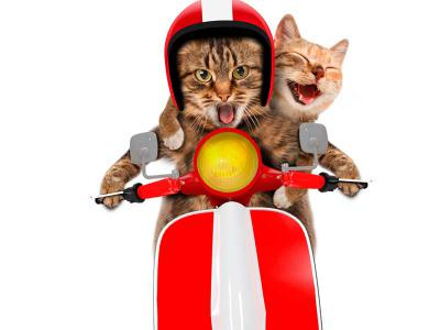Cats on Moped