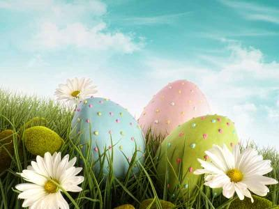 Easter Eggs and Daisies