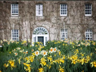 Ballymaloe daffodils in front.jpg