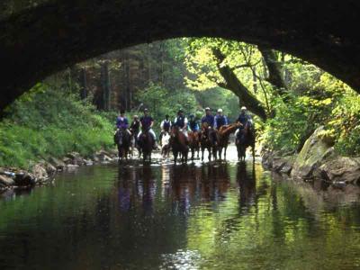 Horses & Riders Under Bridge