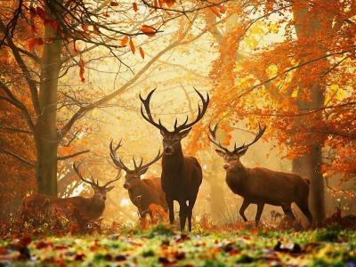 Autumn Image1