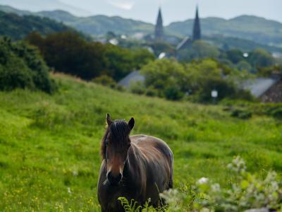 Clifden Horse