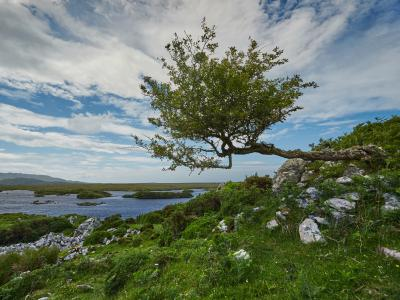 Landscape Connemara