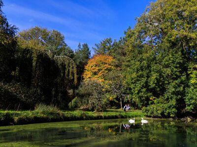 Swans at Ballymaloe