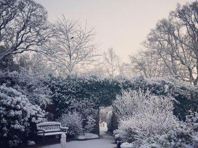 Snow Gardens